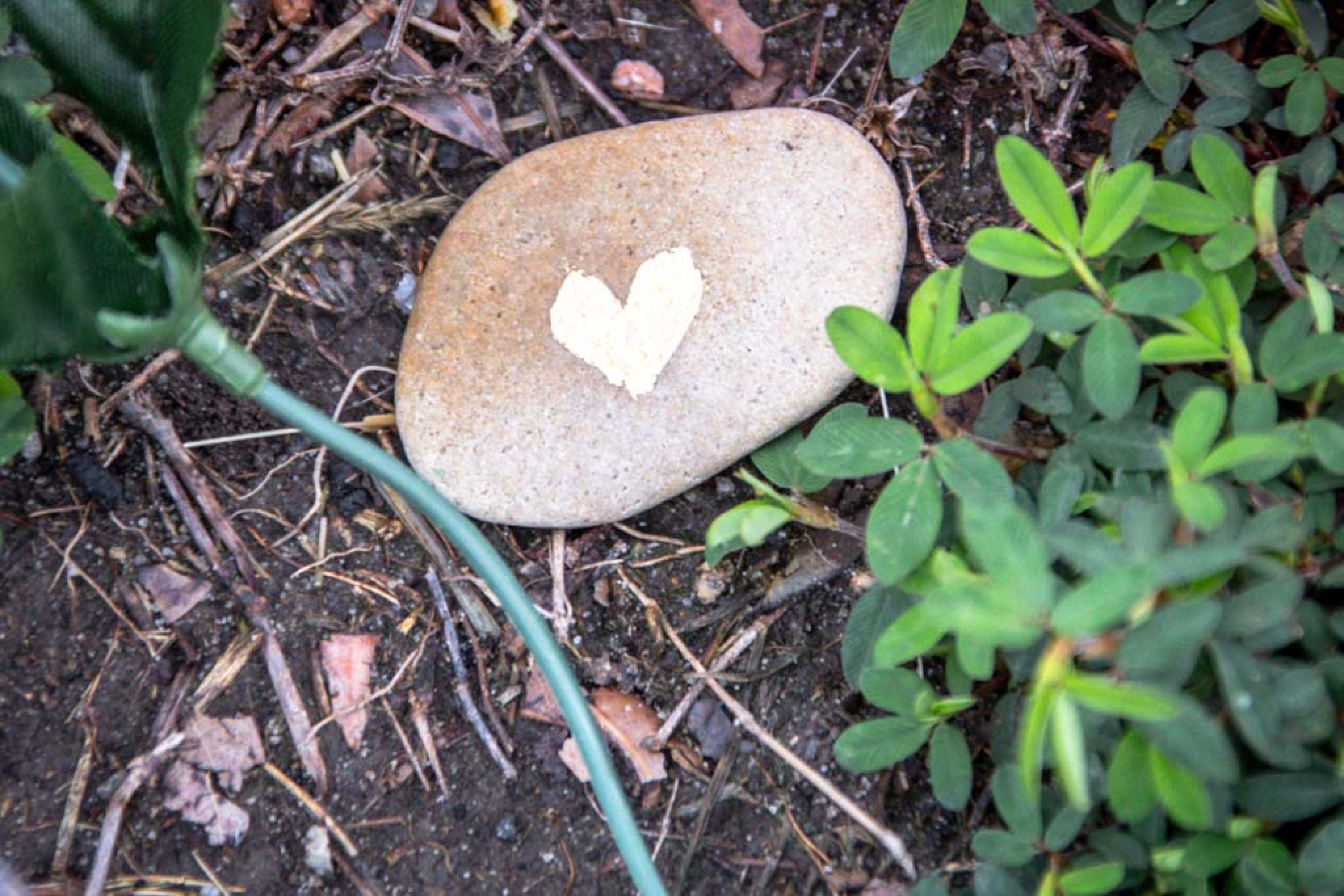 Heart with leaves